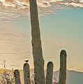 Cactus Wren Serenade by Dan McManus