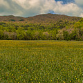 Cades Cove Buttercup Field by Brenda Jacobs