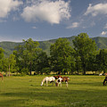 Cades Cove Horses In Smoky Mountains Tennessee Usa by Darrell Young