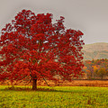 Cades Tree After The Rain by Geraldine DeBoer