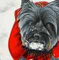 Cairn Terrier In The Snow by Alexandra Cech