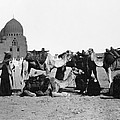 Cairo: Group Of Camels by Granger