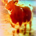 This Calf Has A Hope For A Long And Happy Life But How And When Will It End   by Hilde Widerberg