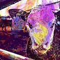 Calf Cow Maverick Farm Animal Farm  by PixBreak Art
