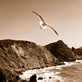 Cali Seagull by Trish Hale
