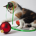Calico Kitten And Christmas Ornaments by Garry Gay