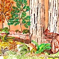 Calif. Redwoods by Connie Valasco