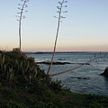 California At Twilight by Mini Arora