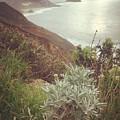 California Coast by Abigail Scott