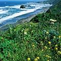 California Coast by Ronnie Glover