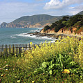 California Coast With Wildflowers And Fence by Carol Groenen