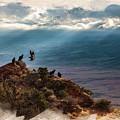 California Condors by Don Kuing