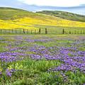 California Country by Lynn Bauer
