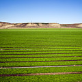 California Farm 14pdxl069 by Howard Stapleton