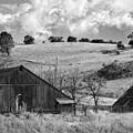 California Farmland - Black And White by Peter Tellone