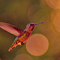 California Hummingbird by Tommy Anderson
