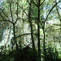 California Jungle by Leah Stark