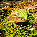 California Newt 4 by Reed Tim