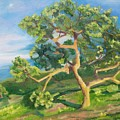 California Oak by Donna Hays