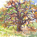 California Oak In Winter by Judith Kunzle