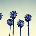 California Palm Trees by Anna Floridia