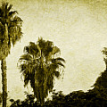 California Palms by Teresa Mucha