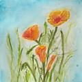 California Poppies by Jennie Hallbrown
