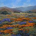 California Poppies by Joe  Geare