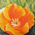 California Poppy by Sharon Marcella Marston