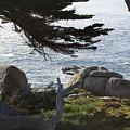 California Shade by Bill Dalleske