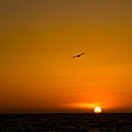 California Sunset by Carl Jackson