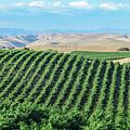 California Vineyards 2 by David A Litman