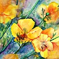 California's Poppies by Dorothy Nalls