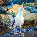 Call Of The Gull by Black Brook Photography