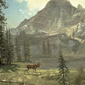 Call Of The Wild by Albert Bierstadt