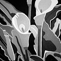 Calla Lilies Bw by Angelina Vick