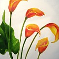 Calla Lilies by Carol Sweetwood