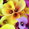 Calla Lilies by Dominic Piperata
