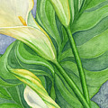 Calla Lilies  by Lorrisa Dussault
