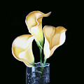 Calla Lily by Darlene Green