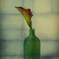 Calla Lily In Green Vase by Garry Gay