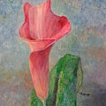 Calla Lily by Jimmie Trotter