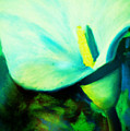 Calla Lily by Melinda Etzold
