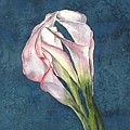 Calla On Paper by Diane Ziemski