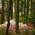 Callaway Gardens Spring Azaleas by Kathy Clark