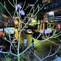 Calle Adelita by Rosanne Licciardi