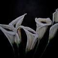 Calli Lillies In The Dark by Dyanne Parker