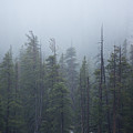 Calm Forest by Ruta Swanson