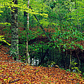 Calm Stream Through Beech And Magnolia by Panoramic Images