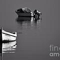 Calm Waters by Rui Militao